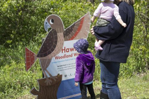 Hawk's Walk